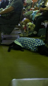 盲導犬_慰霊祭5